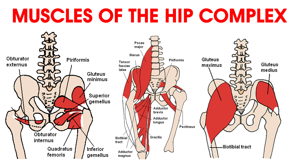 Ask the Physio … Hip Flexors - DanceLife | Australia's ...