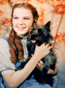 A New Dorothy For The Wizard